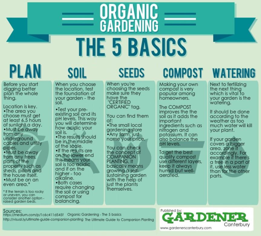 organic-gardening--the-5-basics_5346c52fd7004_w1500