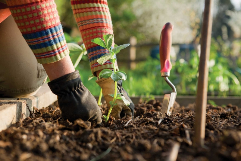 How does Your Gardening Go? Health Benefits of Gardening