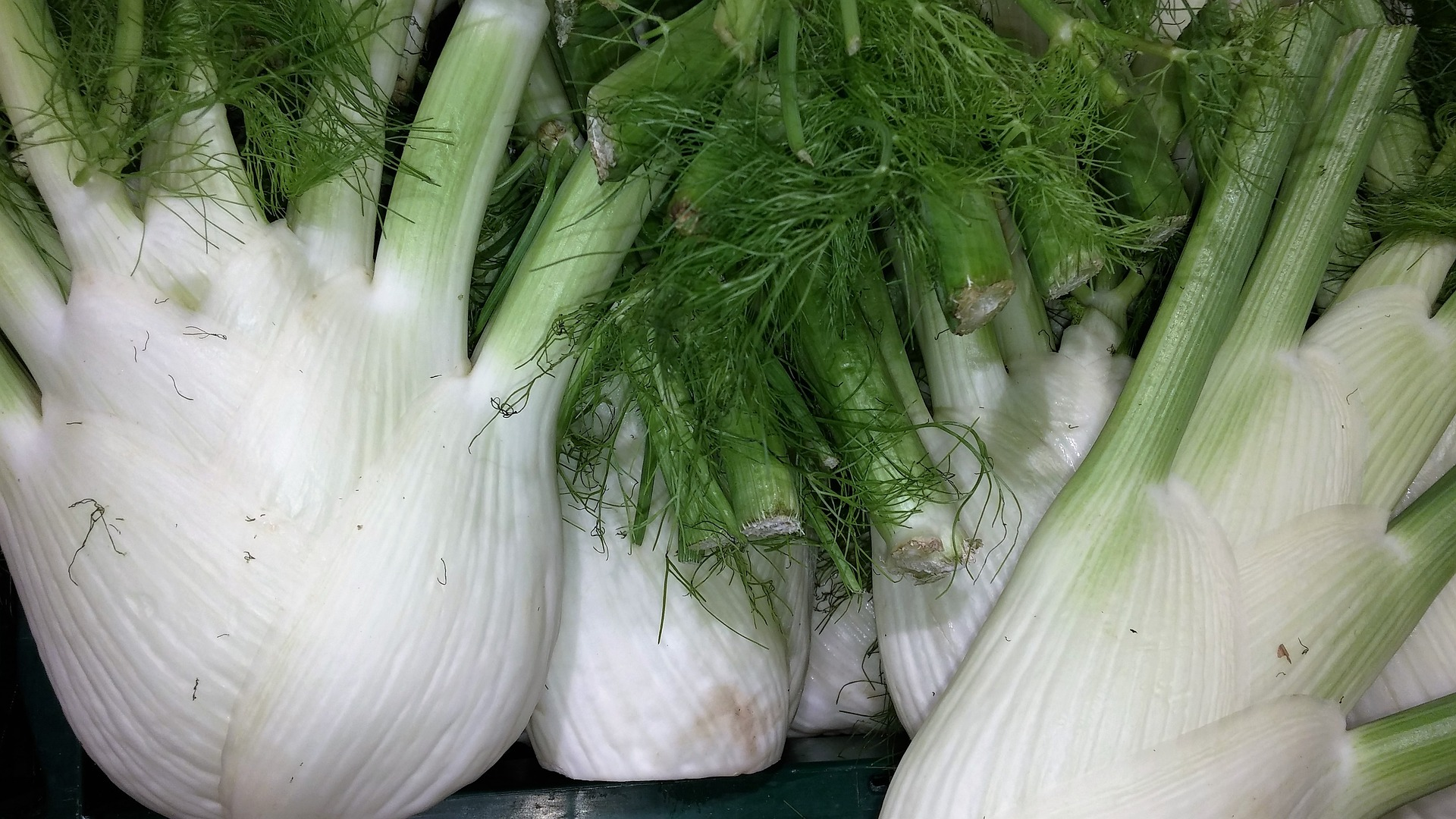 fennel-1614693_1920 (Pixaby by Peter-facebook)