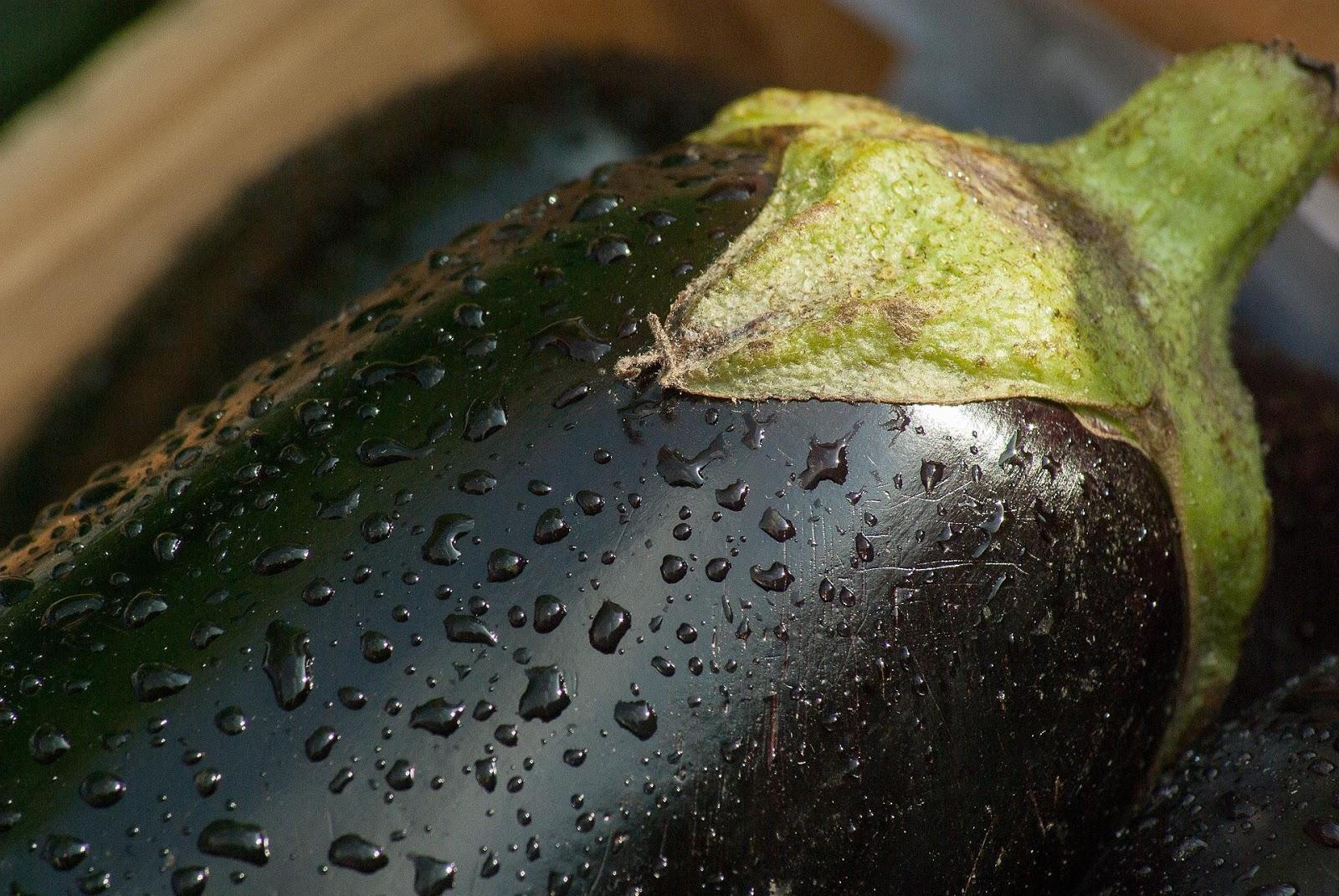 MB 12-02 - eggplant