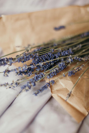 MB 02-03 - Lavendel